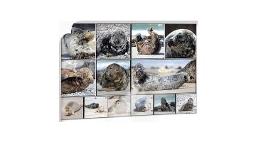 Seehund Collage