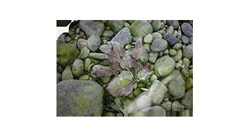 Blatt auf Steinen
